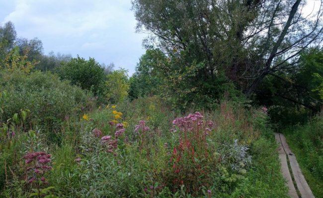 flowerfield-blumenfeld