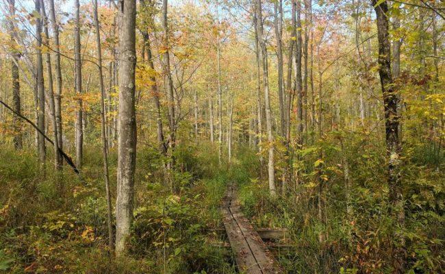 forest-board-walk