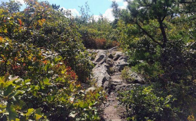 rocks-on-trail