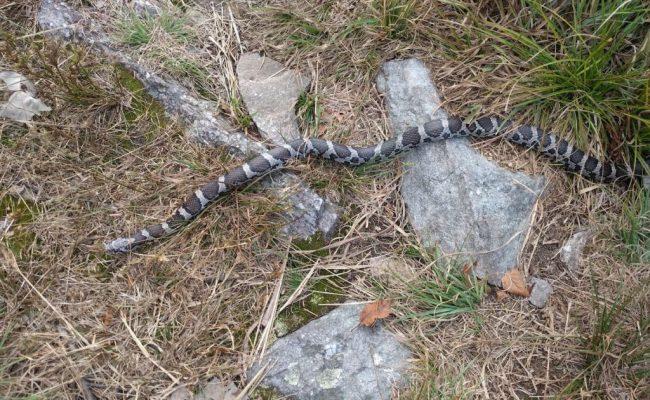 snake-schlange
