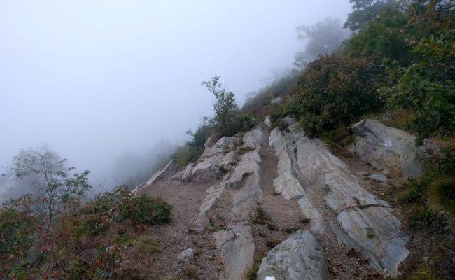 in-fog