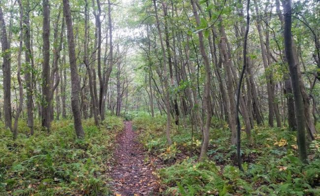 appalachian-trail-pennsylvania