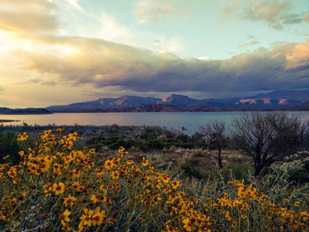 roosevelt-lake-arizona